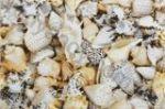 Плитка декор настенная Opoczno Nizza shells inserto A 30 x 45