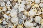 Плитка декор настенная OPOCZNO NIZZA shells inserto В 30 x 45